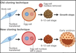 Cloning Stem Cell: cloning skin cell can produce different spare parts cell of different organ or tissue.