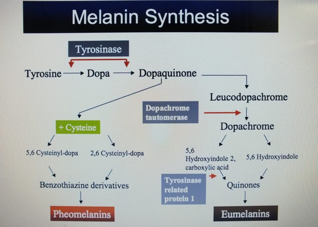 Hydroquinone is the most effective blocking agent of melanin synthesis pathway.