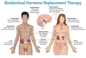 Hormone Replacement Therapy: Estrogen decline starts from the menopause.