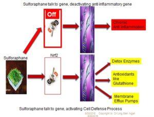Gene: Sulforaphane switch good gene Nrf2 on.