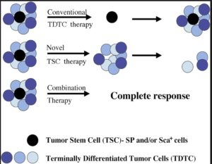 Stem Cell Therapy For Cancer Of Gut