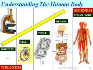 Wellness: the ultimate is at the cell level, or better still is the genetic level.