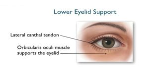 Eye Bag Supporting Structure