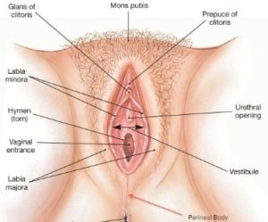 Intimate Bleaching Cream: This is how a pink vulva looks like.
